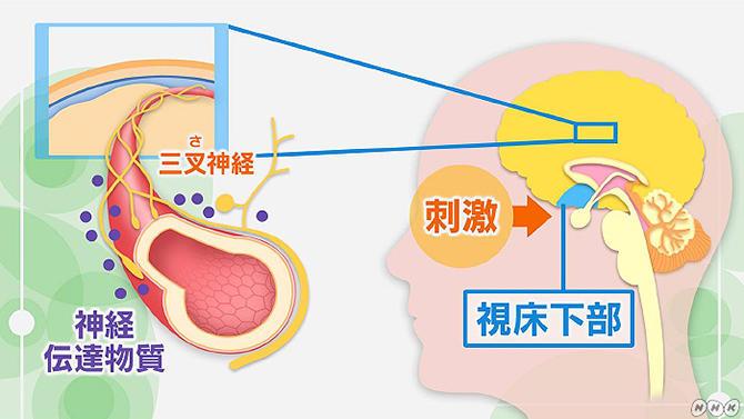 左 の こめかみ 頭痛